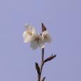 てっぺんの花
