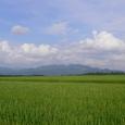 小粟田原と金倉山