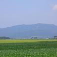 蒲原平野と角田山