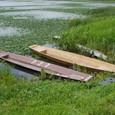 佐潟の狸の舟遊び