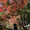 竹寺の紅葉