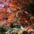 紅葉と茅の輪