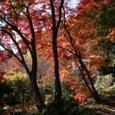 紅葉の竹寺