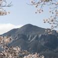 春の武甲山