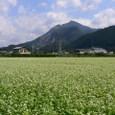 武甲山とそば畑